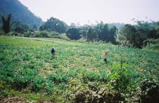 Thai farmers in in the countryside